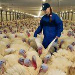 Salmonella e Campylobacter sempre più resistenti agli antibiotici
