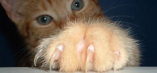 gatto-graffi