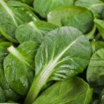 Mandragora erba velenosa negli spinaci: bloccata la vendita in sette regioni